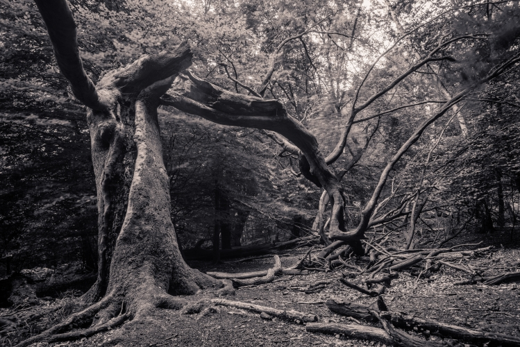 Epping Forest by Dan Lowe